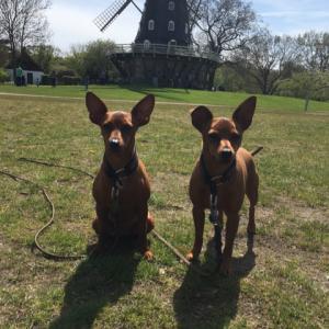 犬の福祉とブリーディング