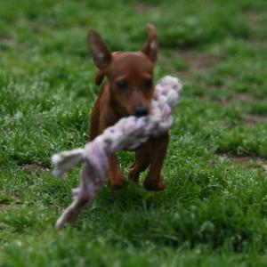 動物福祉と健全性