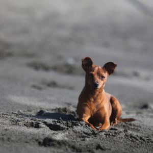犬たちとの災害時の過ごし方を考える。