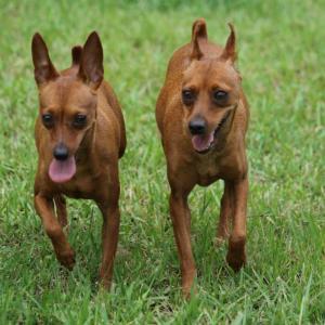 トレーナーさんと訓練士さんの犬の差