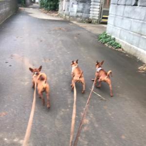 犬の散歩にも変化が大事