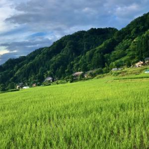 【米ぬか石鹸】 伝統米を求めて新潟魚沼に行ってみた