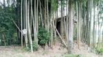 【倒産】全国倒産処理弁護士ネットワーク第19回全国大会(京都)の案内