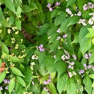 色づく庭の植物たち