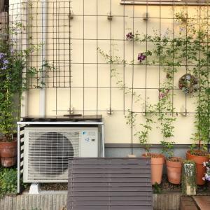 エアコン修理とペチュニア ブリエッタピーチレース