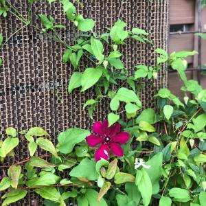 新しい花が咲いた朝