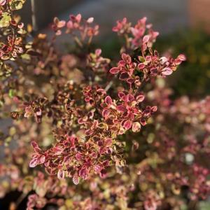 色づく秋の庭 & お知らせ