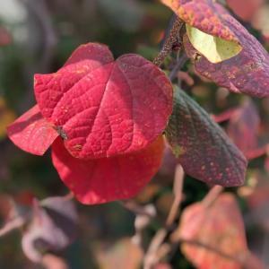 紅葉する庭木