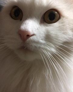 我が家の猫の様子