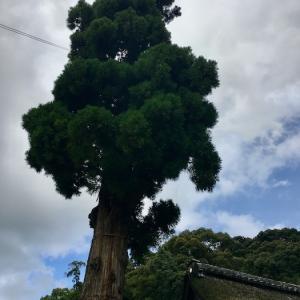 病気平癒の狭井神社へ(三輪山大神神社)