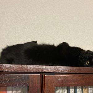 黒猫のくるりんシルエット