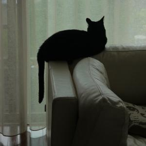 黒猫シルエット