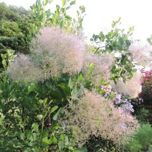 爽やかな風が通る庭でお茶・外壁塗装の終了