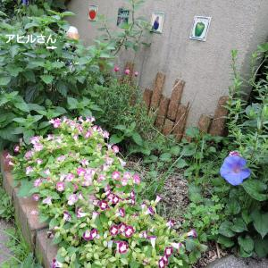 アヒル花壇のトレニア・レンガ花壇に土