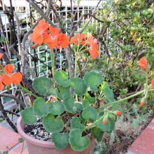クリロー花壇にレンガ積み始める