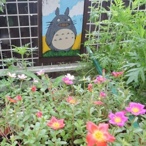 トトロ花壇のポーチュラカ・あと一日、あと一日