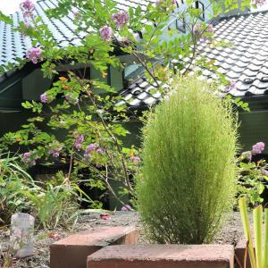 アリス花壇入口にコキア・もっぱら剪定と草取り
