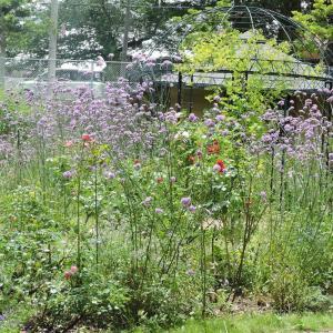 ボランティアで公園花壇手入れの下見
