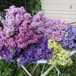 ハウスで花摘み放題・可愛い我儘