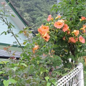 花壇の手入れ・急な雨が降ったり止んだり
