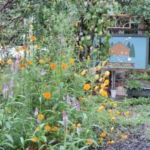 雨の庭・想い出の公園に。ここもボランティアで手入れだった