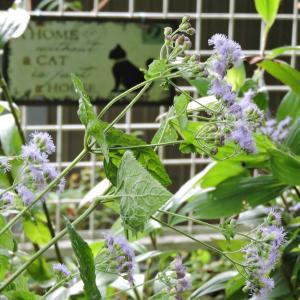 猫の細道花壇・アルミのドア工事始まる