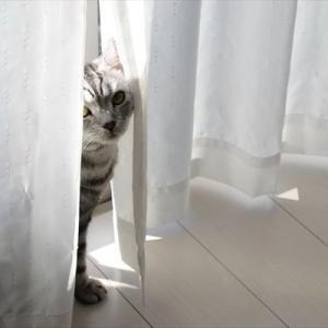 窓際が好きなんです