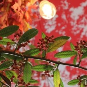 神無月(かんなづき)のパリの花【10月レッスンのお知らせ】