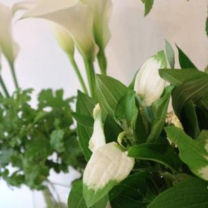 カラーと半夏至の白×グリーン