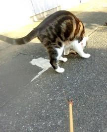 静岡キルトフェスティバルは中止 癒しの猫たち