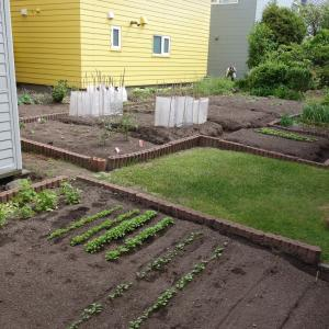 家庭菜園の進捗状況
