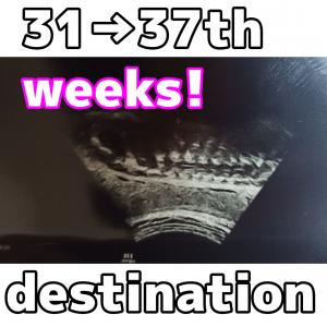 31→37週目 後期も後期