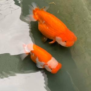 3m池の効用
