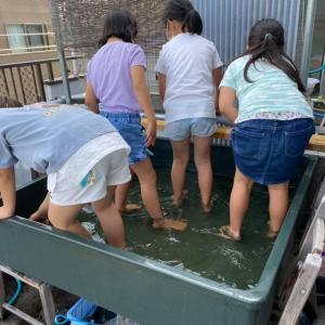 明日7月4日日曜日は葛飾愛魚会の研究会です