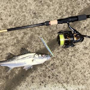 週末の釣り ロッド入魂インプレ