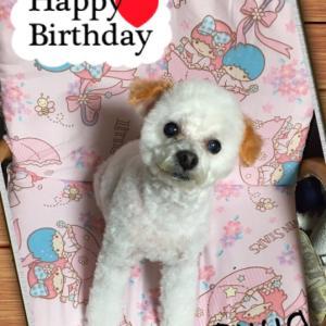 ぷうあ 11歳のお誕生日٩(^‿^)۶