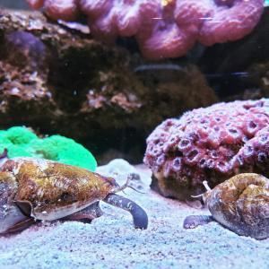 珊瑚とヤドカリ
