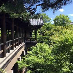 【京都を半日で巡る旅②】東福寺は必見です!