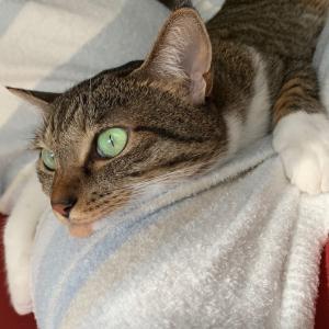 おニューの猫着で休日を…。