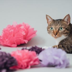 お花畑の猫。