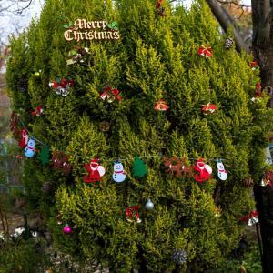 木場公園植物園のクリスマスツリー