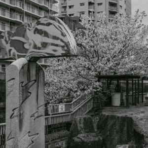 桜とアート