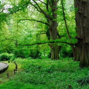 新宿御苑の緑