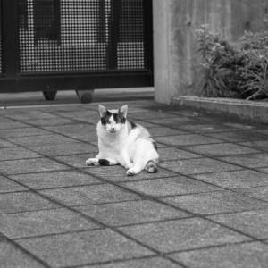 生き残り猫
