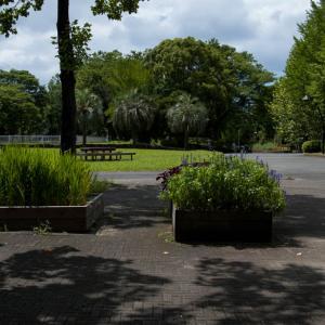 夏の午後の公園