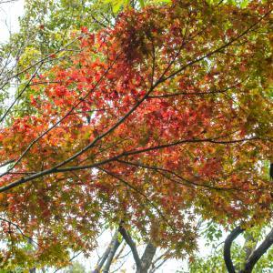 親水公園の紅葉