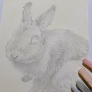 愛嬌のあるウサギとスナネズミちゃんたち
