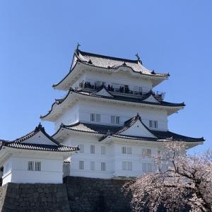 小田原城の桜♪