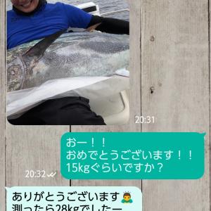 6/15 友人が釣ったマグロもらった 三条「スパイス研究所」さん 長岡(和島村)「加瀬牧場」さん