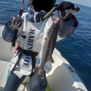 2/28と3/1 TGベイトと鯛ラバ ゆっくり出船してノンビリ釣行